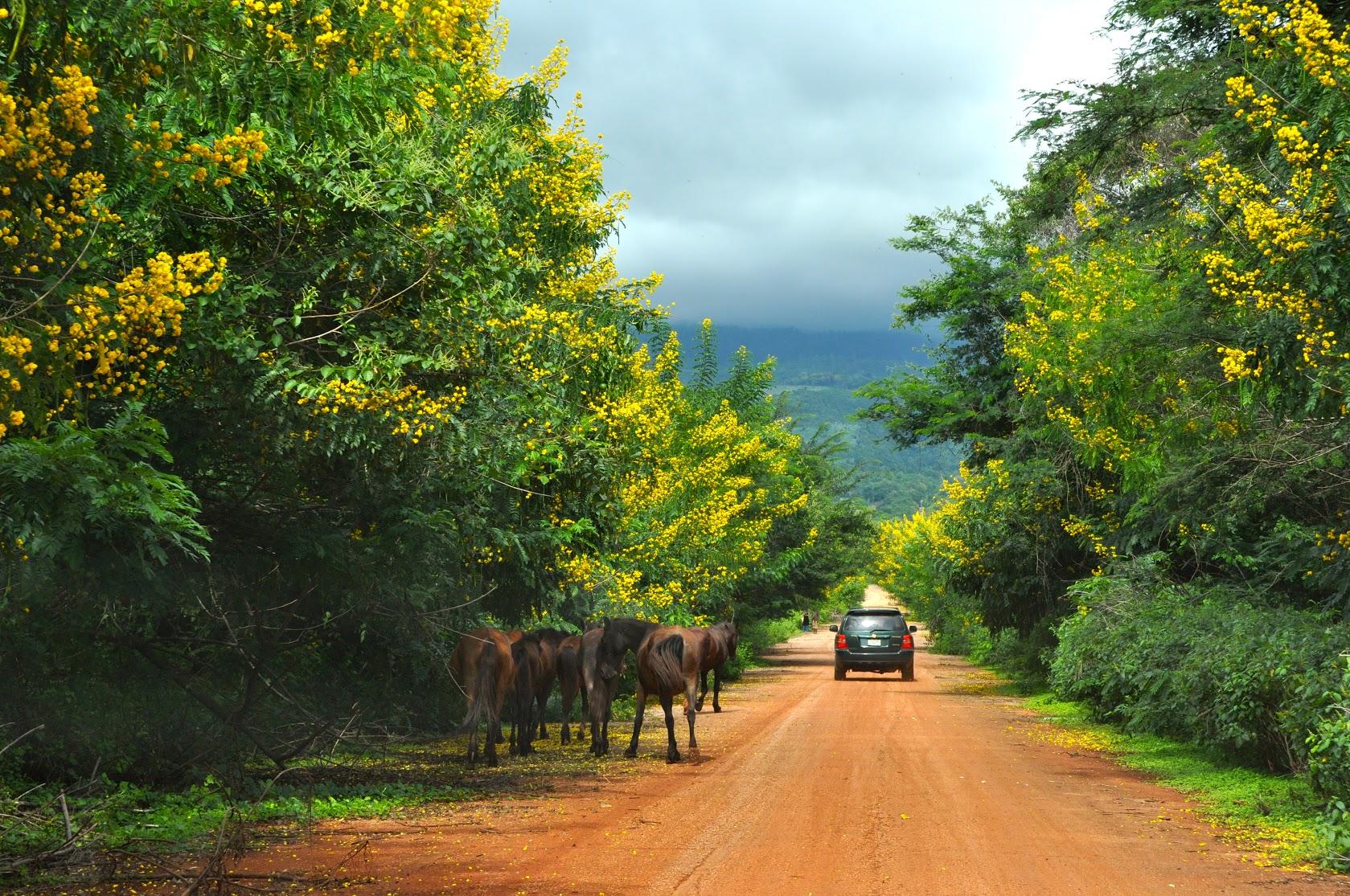 シエラ・デ・バオルコ国立公園内を走る